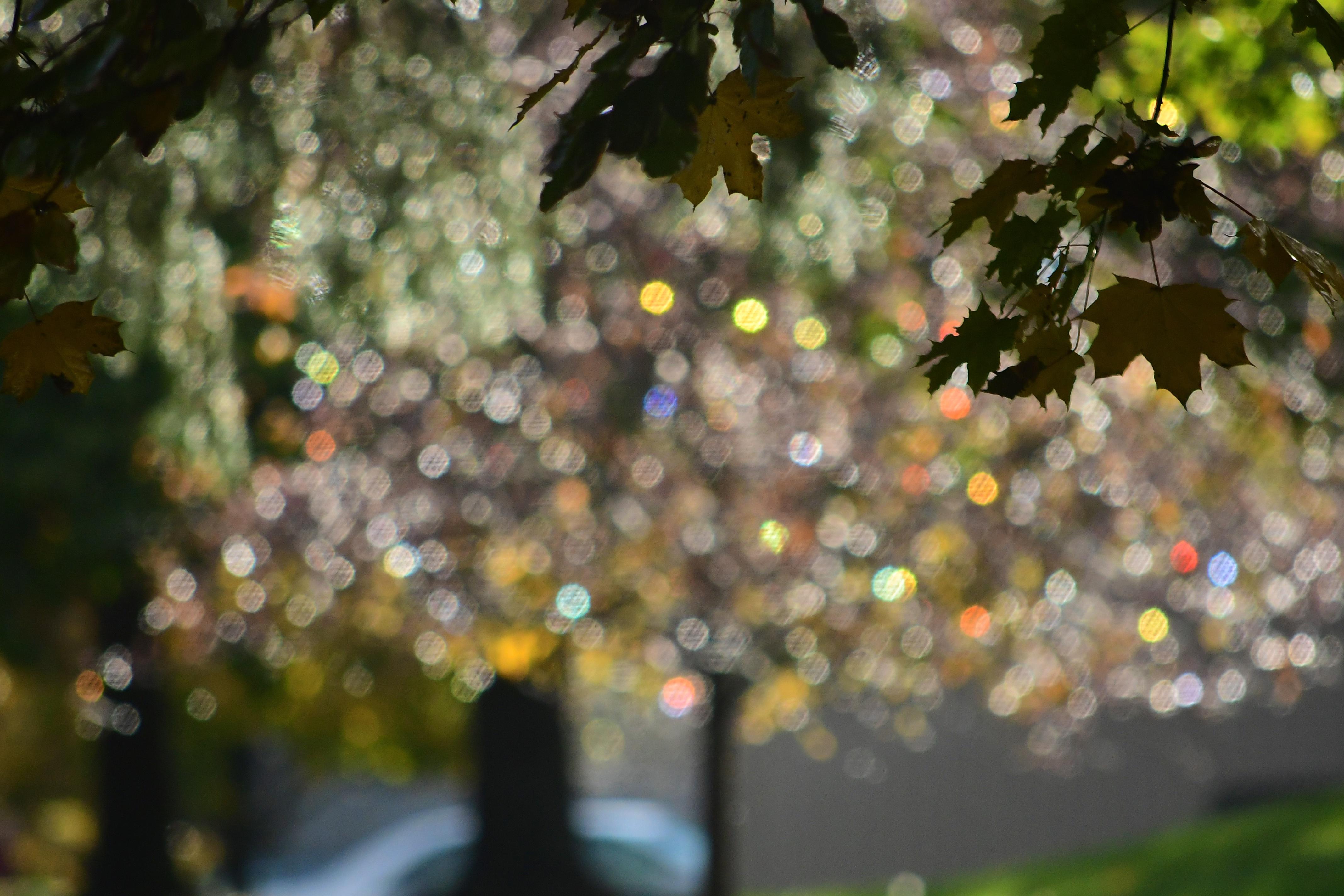 Leaves.1.11.3.18